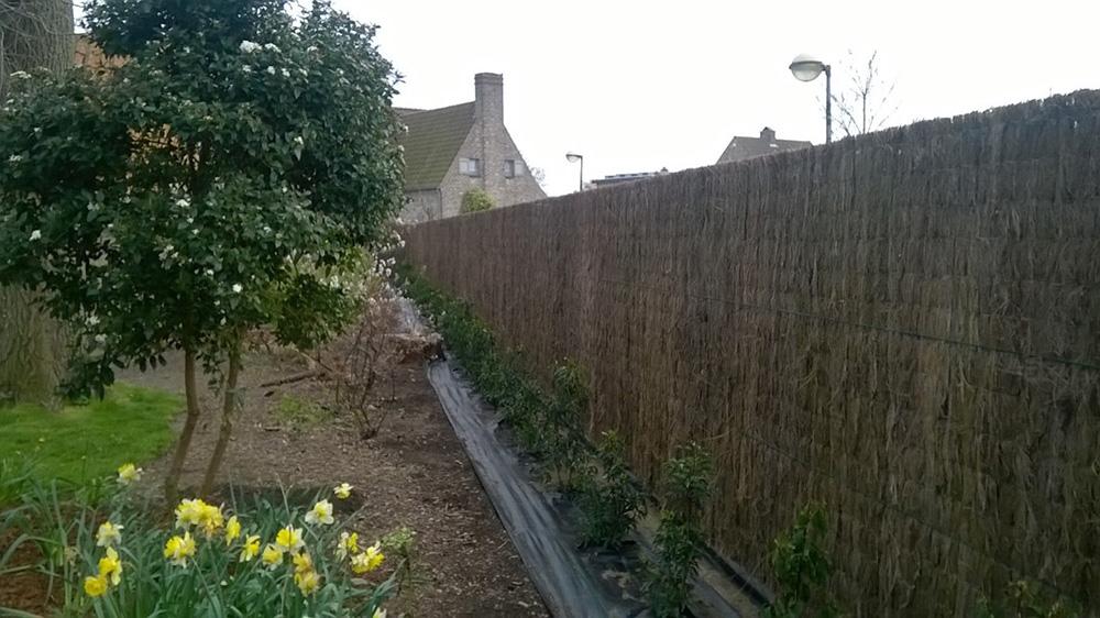 Photo d'une clôture rigide avec un occultant en natte de bruyère